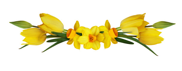 Papiers peints Narcisse Yellow narcissus and tulip flowers in a spring arrangement