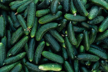 cucumber background top view