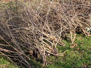 Gartenarbeiten im Winter Grünabfälle Äste