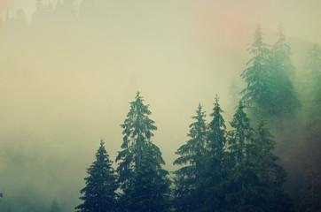 Printed kitchen splashbacks Beige Misty mountain landscape