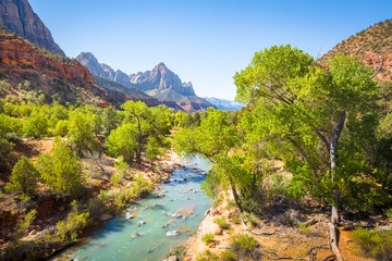 Zion National Park scenery with The Watchman peak and Virgin river in summer, Utah, USA