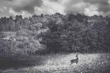 Deer On Field Against Sky