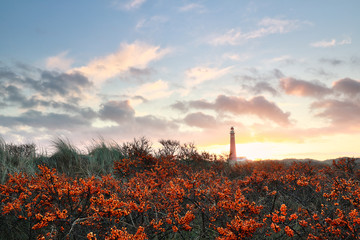 sea hawthorn and red lighthouse at dawn