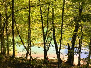 Woman enjoying beautiful lake scenery in the forest near the lake