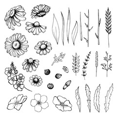 Vector set of flowers, branches, leaves and buds of chamomile and forget-me-not.Isolated black and white elements on a white background.Hand draw illustration.