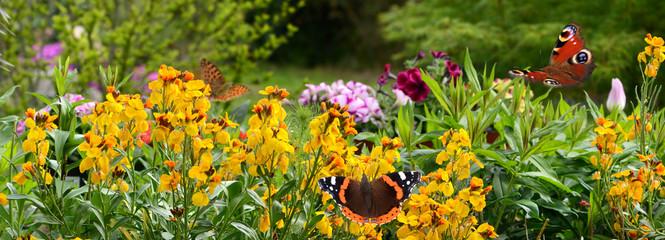 Schmetterling 645