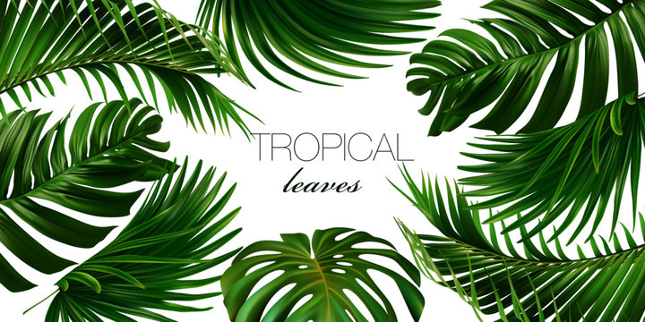 Vector horizontal tropical leaves banners on white background. Exotic botanical design for cosmetics, spa, perfume, health care products, aroma, wedding invitation. Web banner