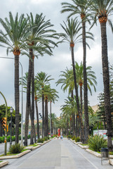 Photo sur Plexiglas Palmier ROAD AMIDST PALM TREES AGAINST SKY IN CITY