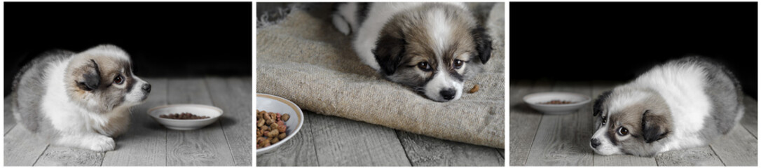 A small puppy lying on a dark wooden background. Collage of three photos