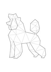 Low poly illustrations of dogs. Poodle standing on white background.