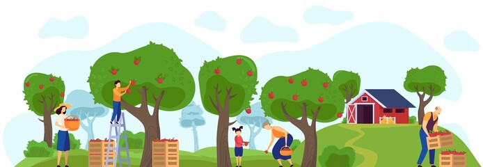 Family working in apple orchard together, farm garden vector illustration