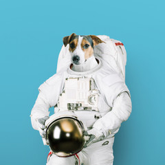 Cute jack russell dog astronaut in a space suit holds a helmet on a blue background. Concept of dreams of becoming an spaceman. Creative idea