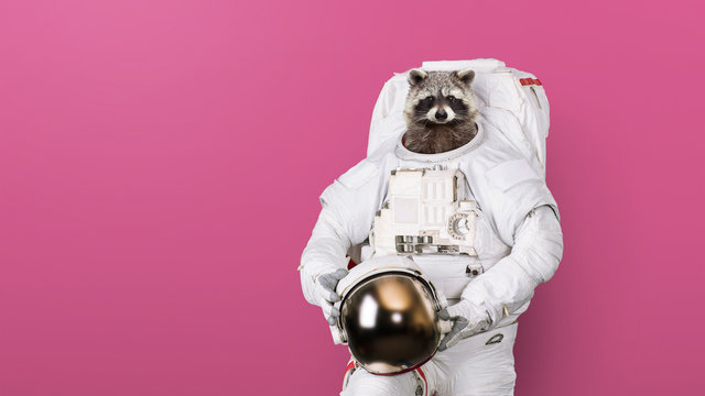 Funny raccoon astronaut in a space suit with a helmet on a pink background. Creative idea