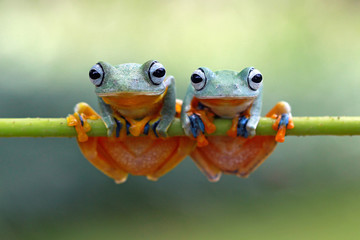 Close-Up Portrait Of Frogs On Branch