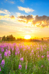 amazing rural landscape with sunrise  and  blossoming meadow