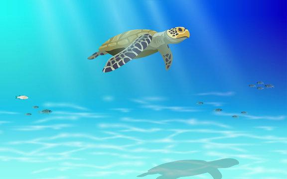 Sea turtle swimming in the sea