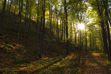 Wall Murals Forest Autumn Sunset in the forest with lens flare
