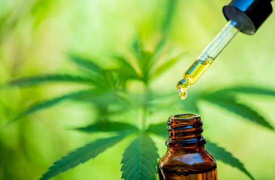 CBD hemp oil, drip, bio-medicine and ecology, hemp plant, herb, medicine, cbd oil from medical extraction