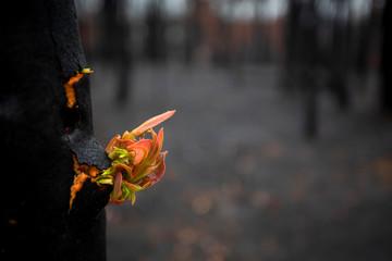 Trees literally break open bursting forth new growth