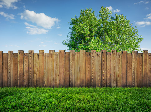 tree in garden and wooden backyard fence with grass