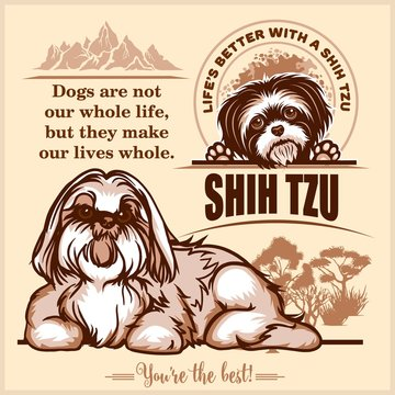 Shih Tzu - vector set for t-shirt, logo and template badges on light