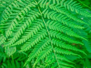 Tuinposter Tropische Bladeren FULL FRAME SHOT OF FERN