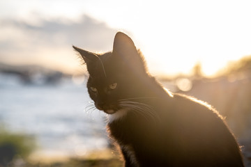 Portrait of a young black stray cat sitting near the sea on a warm sunny day
