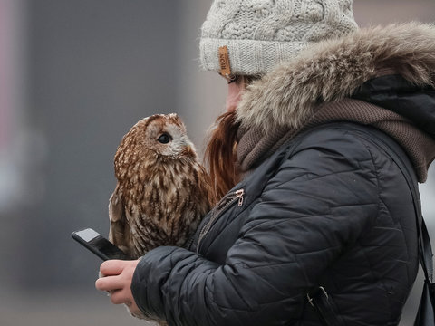 A woman with an owl, which poses for pictures with tourists, uses her mobile phone as they wait for clients in central Kiev