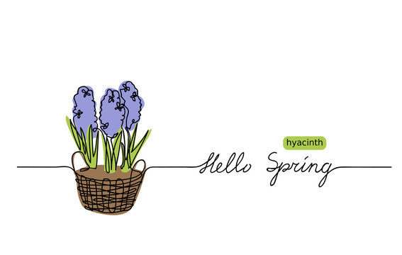 Hyacinth vector sketch and lettering Hello Spring. First flowers one continuous line drawing. Hello Spring  web banner, background,greeting.