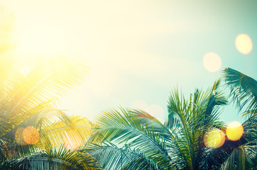 Foto op Canvas Bomen Tropical palm tree with colorful bokeh sun light on sunset sky cloud abstract background.