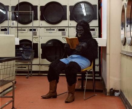 Funny Gorilla Person Reading Book at Laundrymat