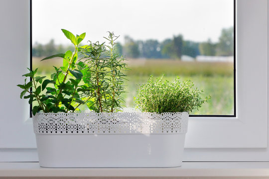 Fresh herbs in the basket on the window