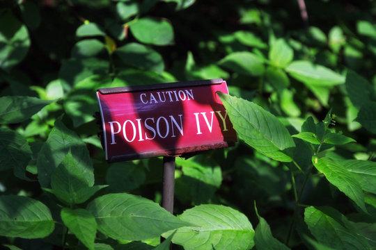 Poison Ivy Schild