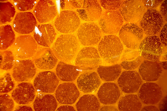 Honey close-up. Amber sweet honey in honeycomb. Transparent honey flows down the honeycomb