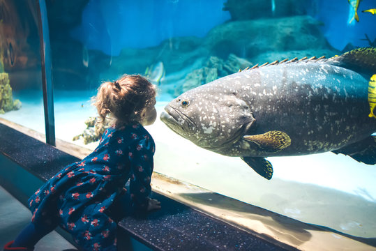 Child watching fish through the glass in a Oceanarium.
