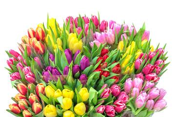 Keuken foto achterwand Tulp Tulip flowers Spring tulip bouquet white background