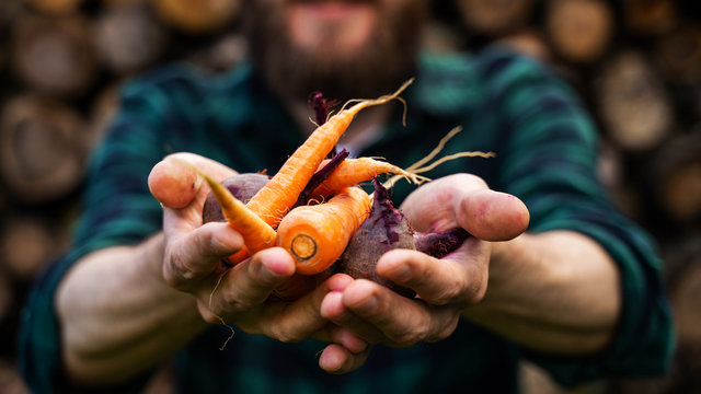 Carrots and beets in the man farmer hands in a green plaid shirt