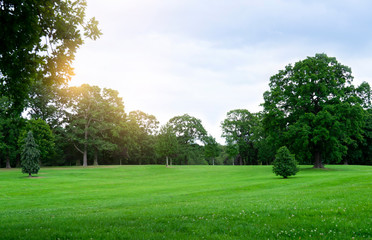 Garden Poster Trees Fresh air and beautiful natural landscape of meadow with green tree in the sunny day for summer background, Beautiful lanscape of grass field with forest trees and enviroment public park with sun ray