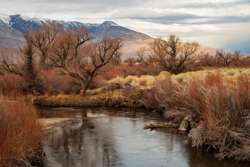 riverside plants in valley desert autumn landscape in Sierra Nevada mountains