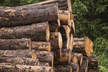 Fototapete - Fresh Cut Wood Logs