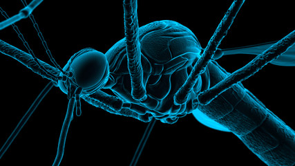 Mosquito - Microscopic Scan