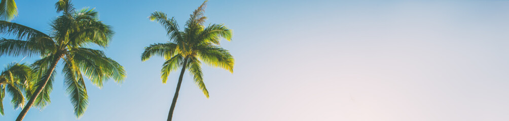 Spoed Fotobehang Strand Summer beach background palm trees against blue sky banner panorama, tropical Caribbean travel destination.