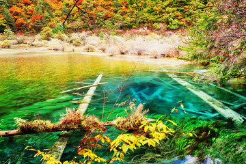 Tuinposter Geel Azure lake with submerged tree trunks among fall woods