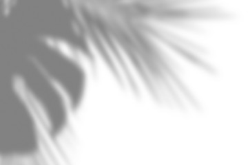 Overlay effect for photo. Gray shadow of the palm leaves on a white wall. Abstract neutral nature concept blurred background. Dappled light. Wall mural