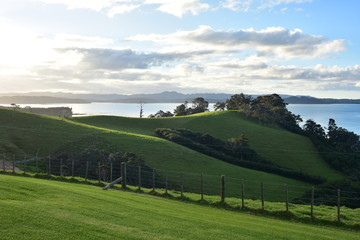 Green pastures on hills sloping down to sea shore in afternoon back light.
