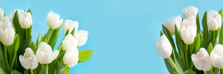 Bouquet of white tulips on blue background. Copy space. Spring. banner. Close up.