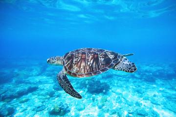 Foto op Canvas Schildpad ocean-turtle