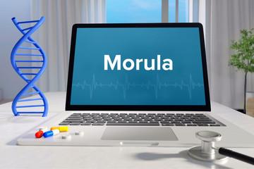 Morula – Medizin/Gesundheit. Computer im Büro mit Begriff auf dem Bildschirm. Arzt/Gesundheitswesen