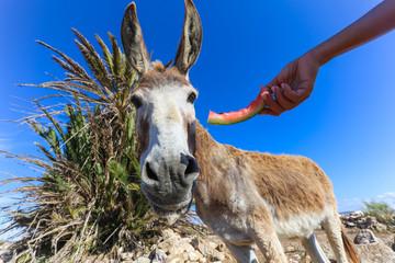 Tuinposter Ezel Close-up of donkey feeding