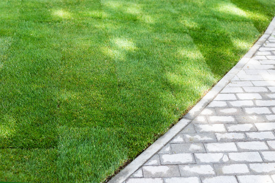 Straigh line of new freshly installed green rolled lawn grass carpet along stone pavement sidewalk at city park or backyard on bright sunny day. Green Gardening landcaping service
